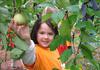 Kindergarten Trip to Carter Mountain Orchard